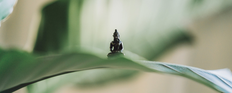 Zen meets Yoga