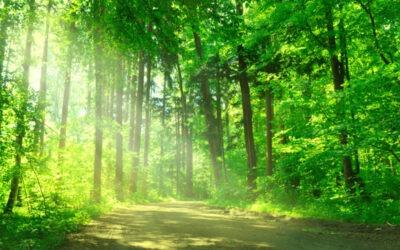 Nachhaltigkeit auch bei der Heizenergie