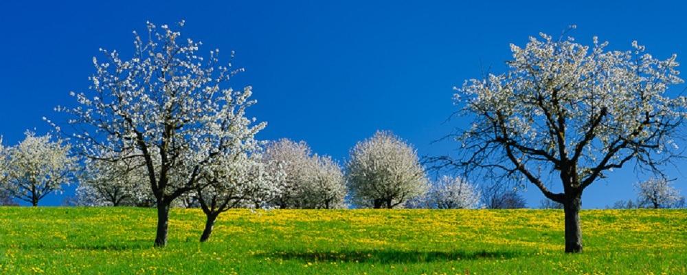 Der Atem: die Quelle für Vitalität und Lebenskraft